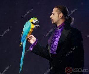 The magician & the parrot - Ảo thuật gia và con vẹt