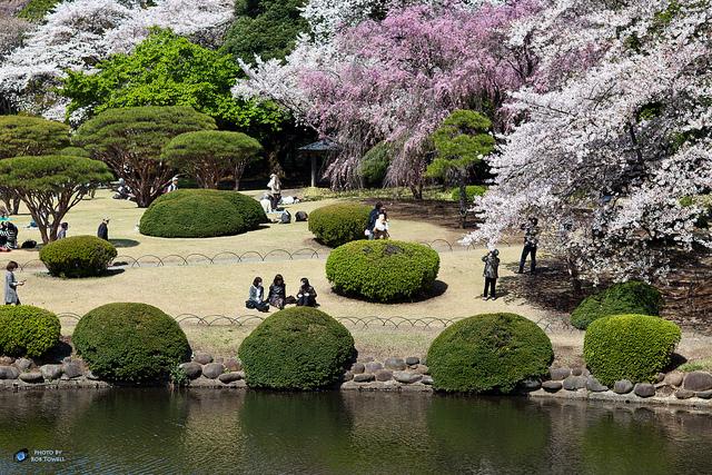 công viên quốc gia Shinjuku Gyoen nổi tiếng hn
