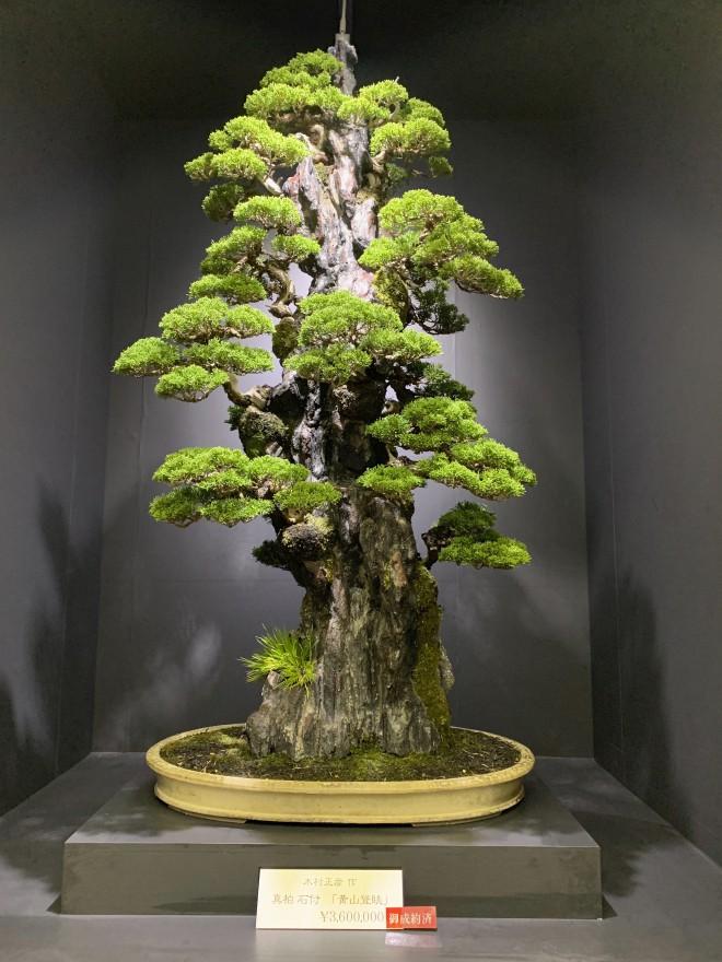 nghệ thuật bonsai định hình cực độc đáo hn