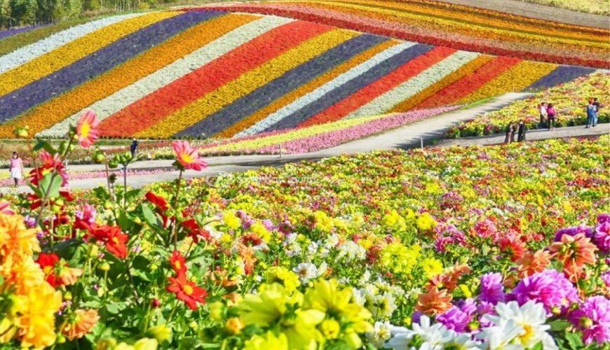 vẻ đẹp cầu vồng của vườn hoa Shikisai-no-Oka NB