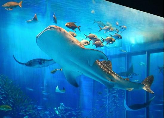 sinh vật đặc biệt nơi lòng đại dương hn