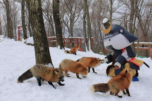 những chú cáo cực đáng yêu ở làng cáo Nhật bản hn
